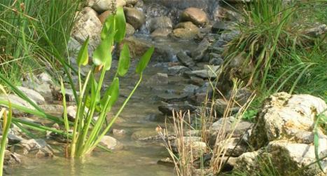 eau-1