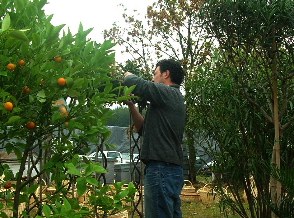 L 39 entretien for Conception de jardin dans le paysage