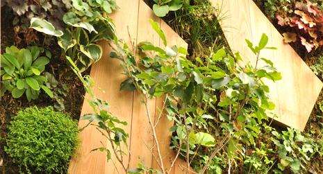 Aménagement de murs végétalisé