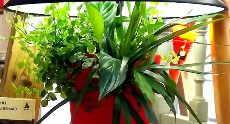 UnLampe végétale Lumipouss