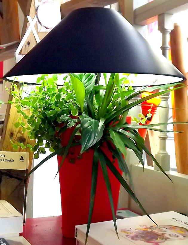 lampe v g tale lumipouss 39 un clic et a pousse les mains de jardin. Black Bedroom Furniture Sets. Home Design Ideas