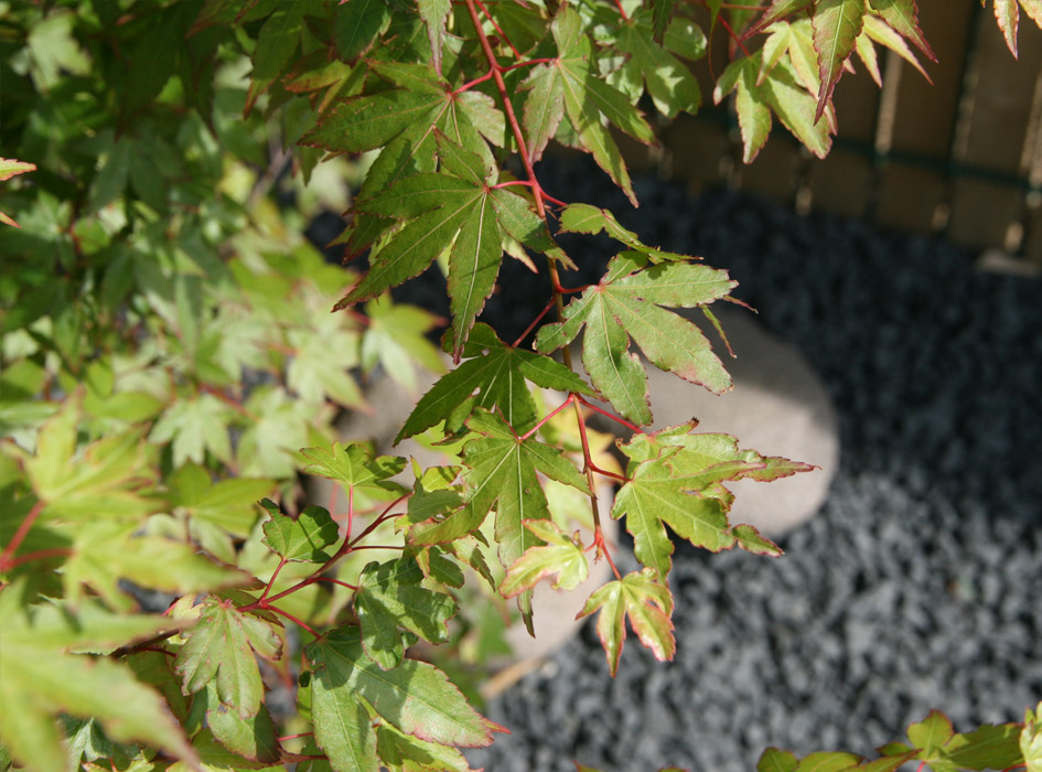 Aménagement paysager Le végétal - Les Mains de Jardin